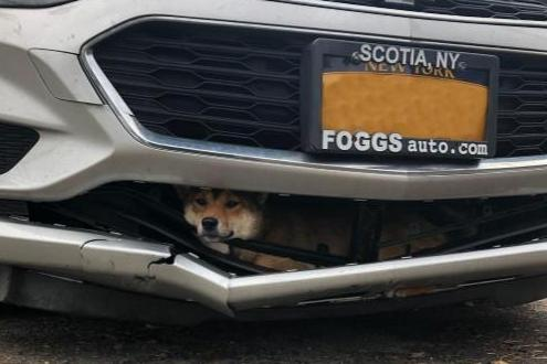 Dog-hit-by-car-survives-45-minute-drive-trapped-inside-bumper