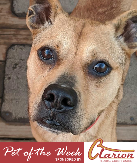 pet-of-the-week-chester