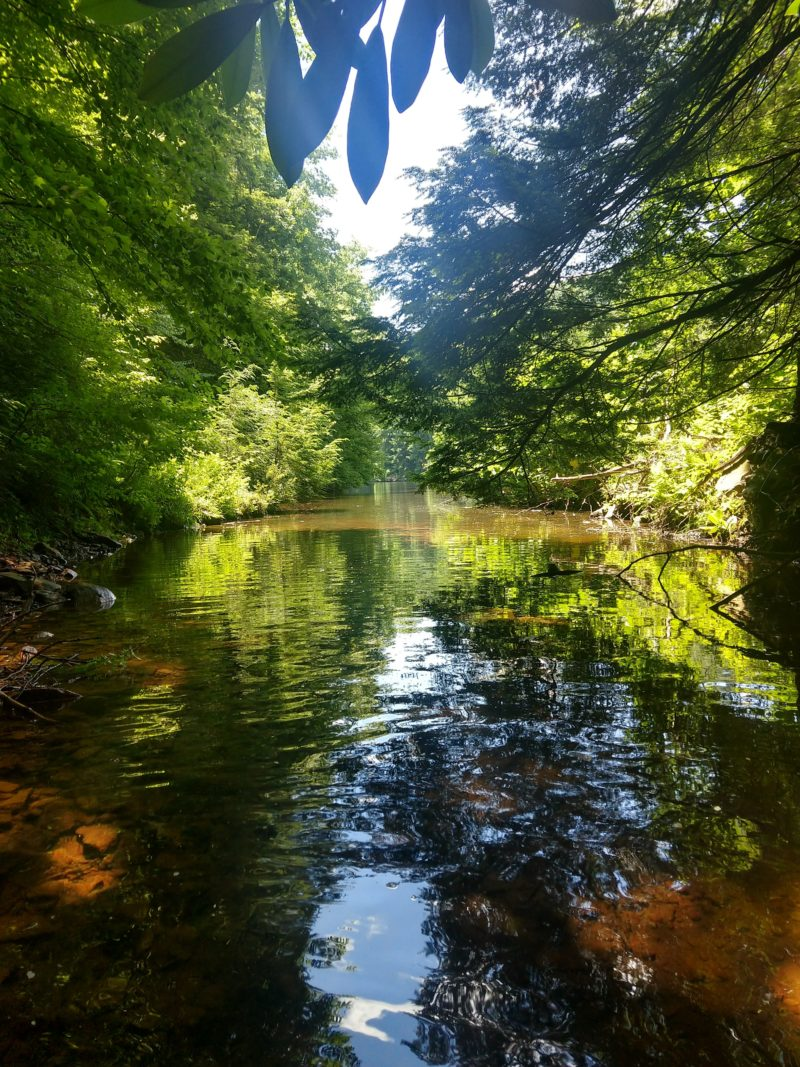 Photo taken on the Clarion river by Melanie Phillips.