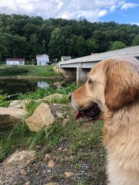 Charlie enjoying the water and the view submitted by Shelia Dawn. Clarion County Photo Of The Day brought to you by Window World Of Butler.