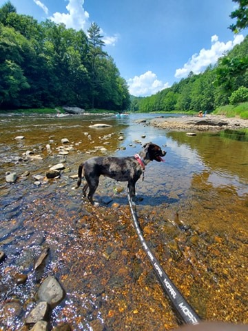 Sutten Noel enjoying a day in Cook Forest. Submitted by Camie Marie. Clarion Co. photo of the day brought to you by Window World of Butler.