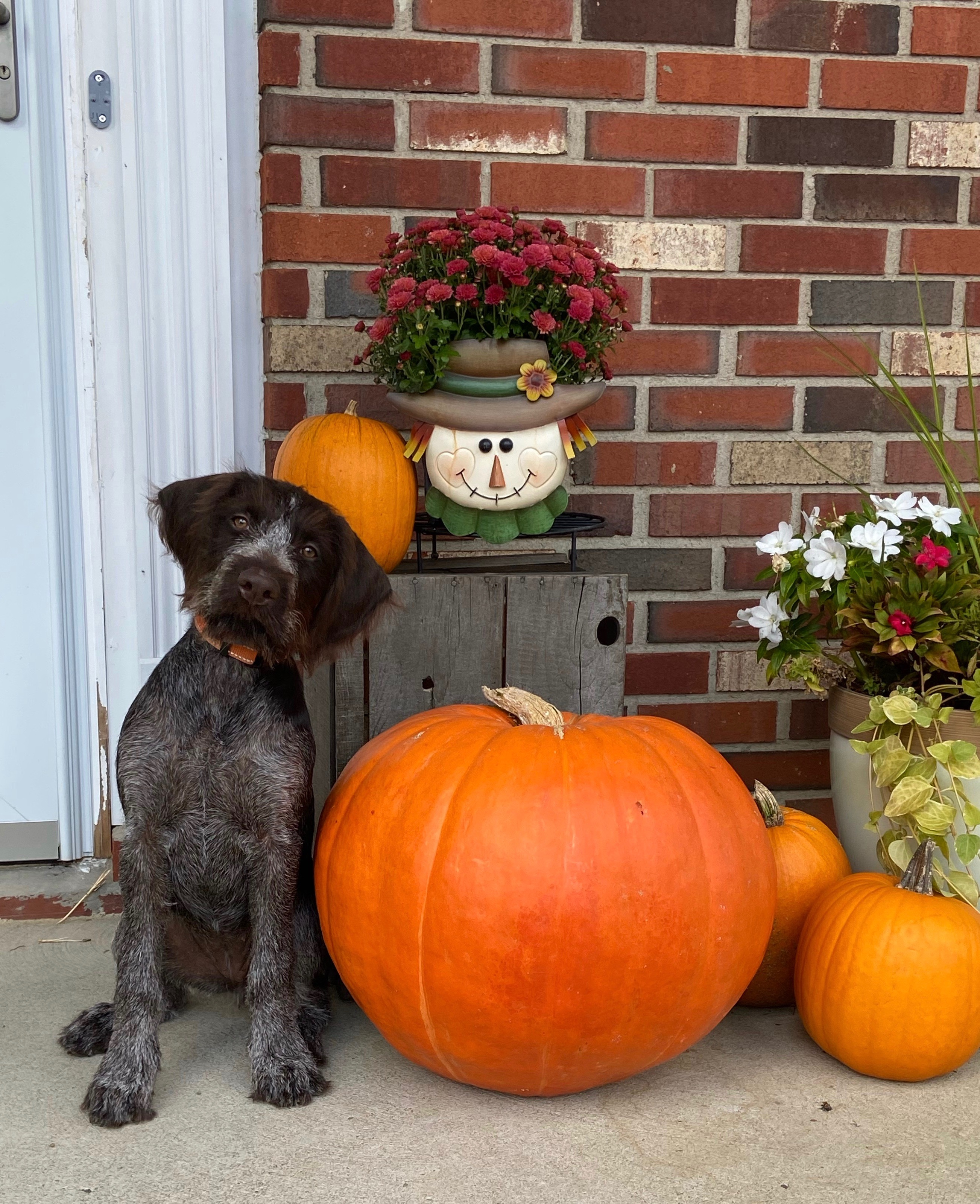 Wingard family dog, Scout, enjoying the fall scenery! Submitted by Nate Wingard.