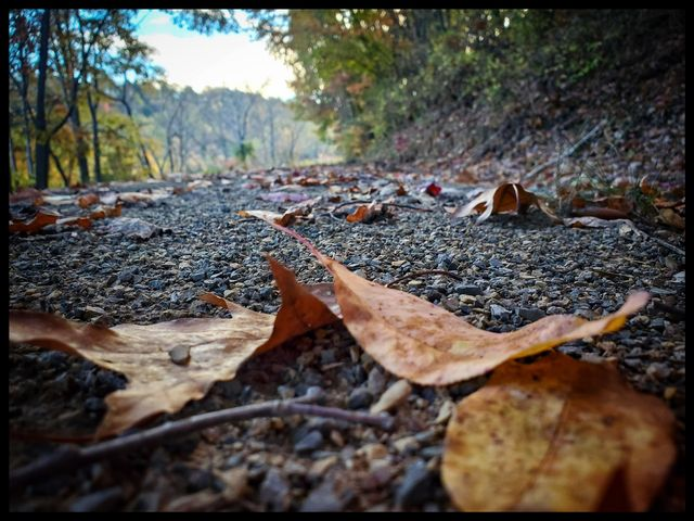 Last days of fall. Submitted by Mandy Rupp.