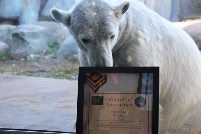 Canadian-Army-promotes-polar-bear-to-honorary-master-corporal