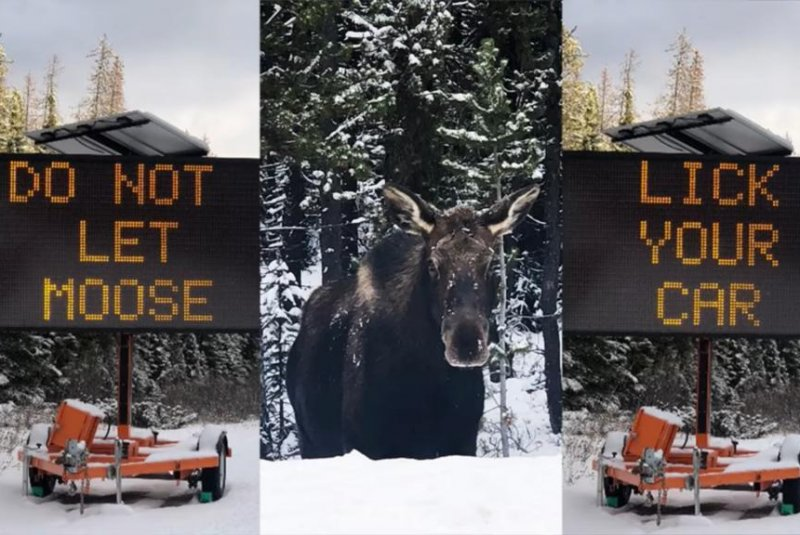 Canadian-town-posts-signs-reading-Do-not-let-moose-lick-your-car