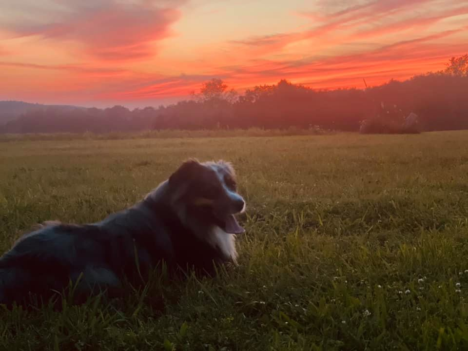Rio enjoying the summer and the Kossuth sunset. Photo submitted by Elizabeth Griffin.
