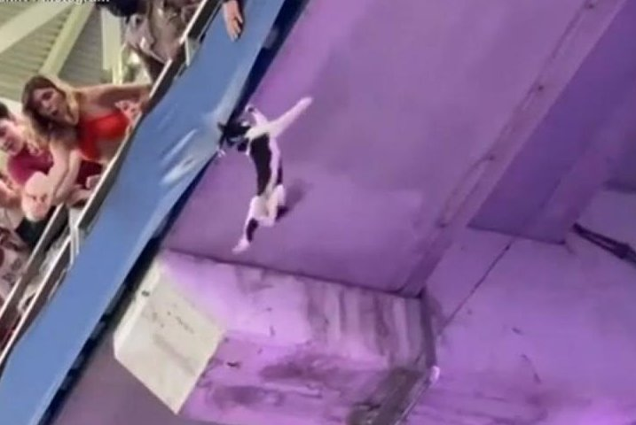 Fans-catch-falling-cat-in-US-flag-at-University-of-Miami-football-game