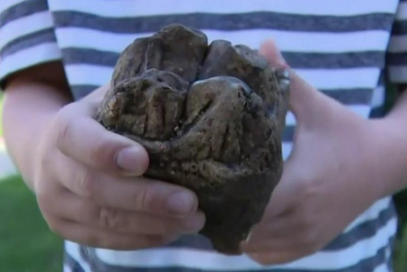 6-year-old-finds-mastodon-tooth-in-Michigan-nature-preserve